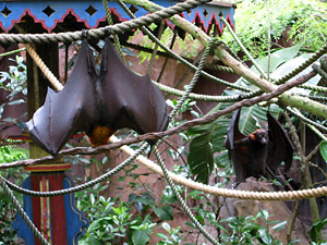 Giant Bats in Disney's Animal Kingdom